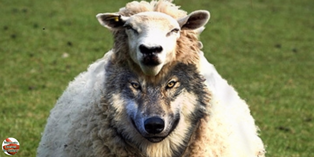 "Featured image of the article: ""How To Deal With Toxic People And Not Let Them Ruin Your Life"" . Wolf in sheep's clothing."