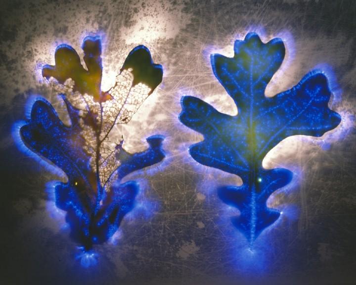 Robert Buelteman. Электрические цветы 19