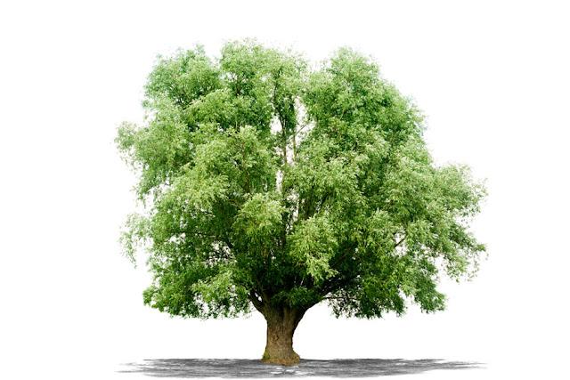 El árbol de los problemas