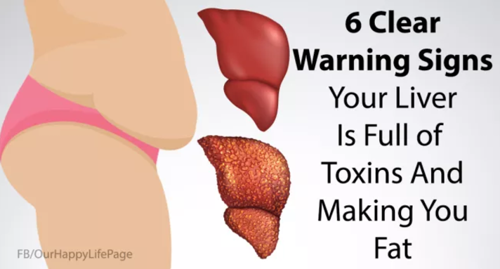 6 signs that your liver is full of toxins and making you fat (and, Sphenoid