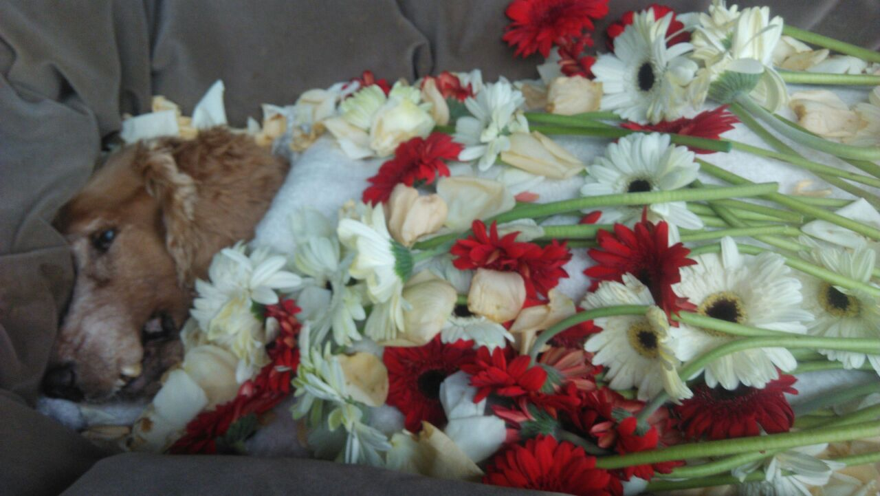 Pets cremation memorial funeral malayiaraphael15 jan 2003 to 11 pets cremation memorial funeral malayiaraphael15 jan 2003 to 11 march 2017 izmirmasajfo