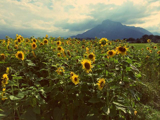 1000 Fragen an mich selbst. #1 Sonnenblumenfeld Untersberg www.nanawhatelse.at