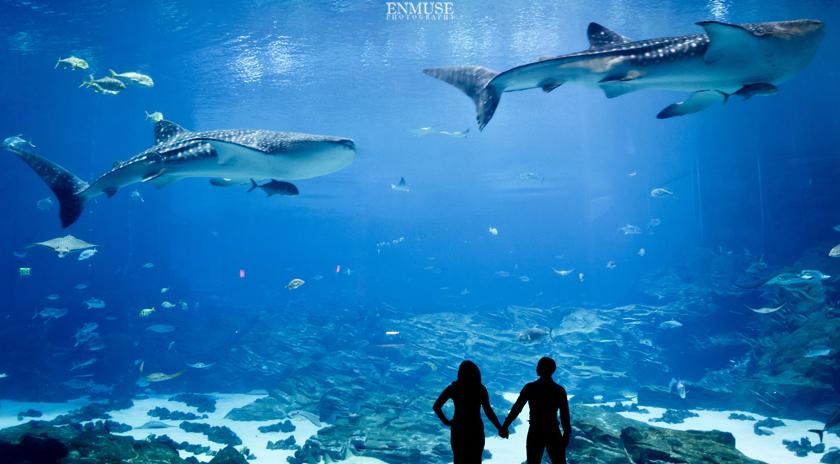 Georgia Aquarium Engagement Session Enmuse Art Photography
