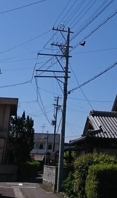 電柱にカラスの巣 防除テスト日記②