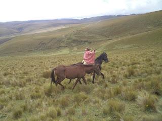 Ecuador, riitta reissaa, ratsastusmatka