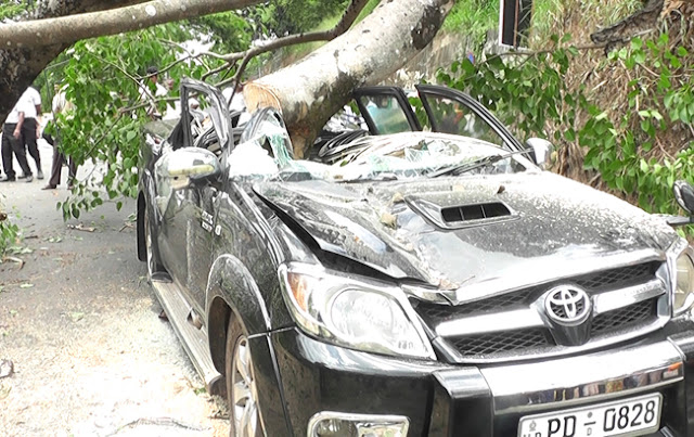 Woman dies after boo tree crushes kandy