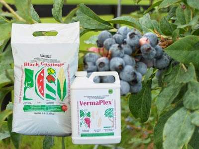 Certified organic worm castings and VermaPlex for blueberies
