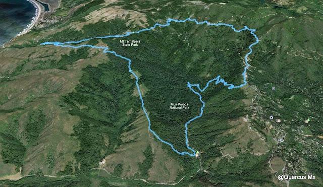 Trail en el Muir Woods National Park y en el Mount Tamalpais State Park