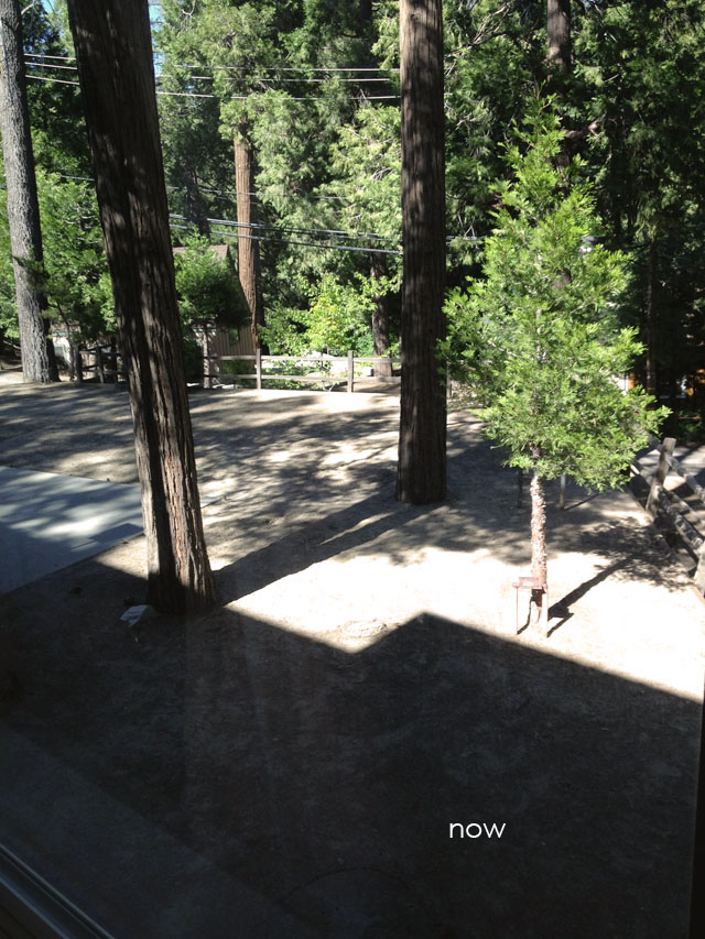 backyard DIY progress
