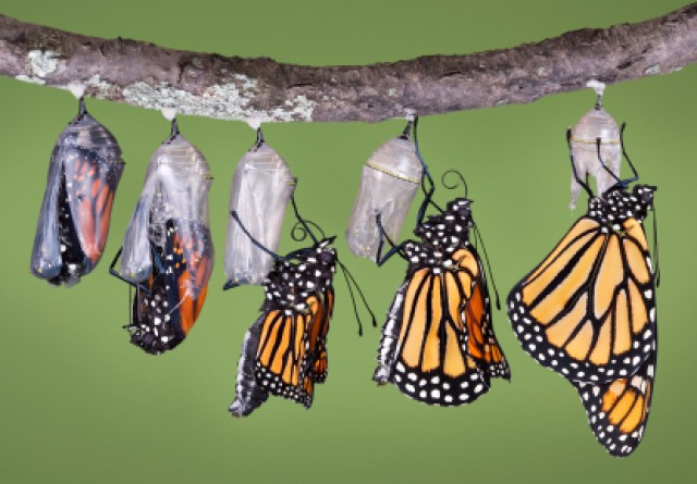 Resultado de imagem para borboleta saindo do casulo