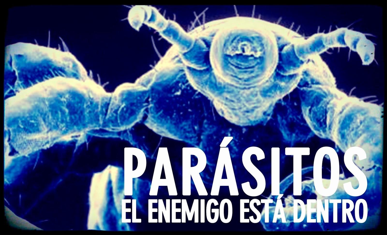 El parásito castaño oscuro en el intestino