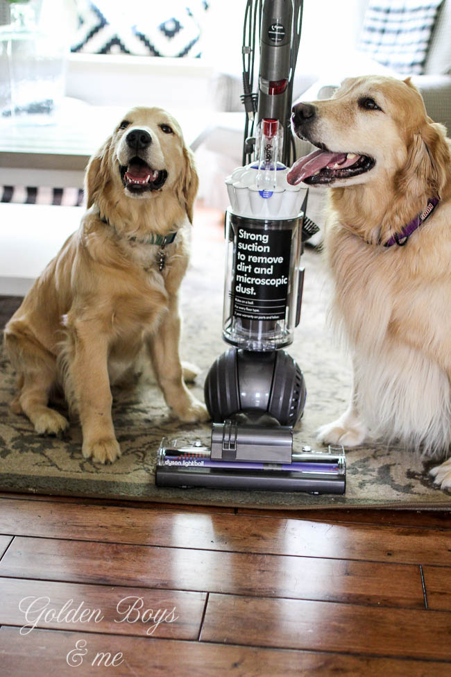 Dyson Light Ball Vacuum Review in a home with kids and pets