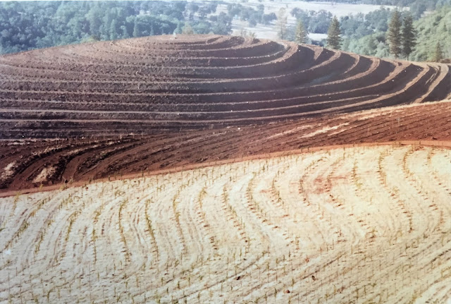 Fellowship of Friends Renaissance Vineyard and Winery vineyard slopes 1 and 23 January 1981