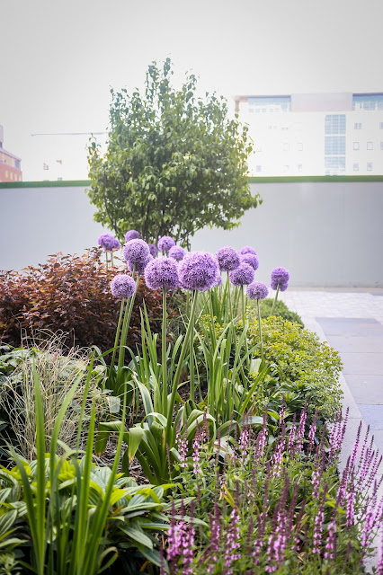 allium border at crowne plaza newcastle