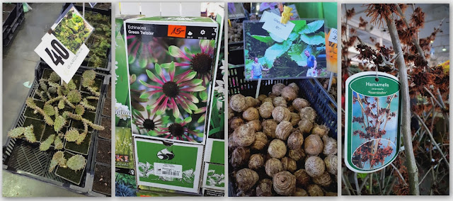 rośliny na targach gardenia