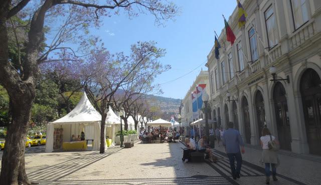 Funchal mit blühenden Jacaranda-Bäumen