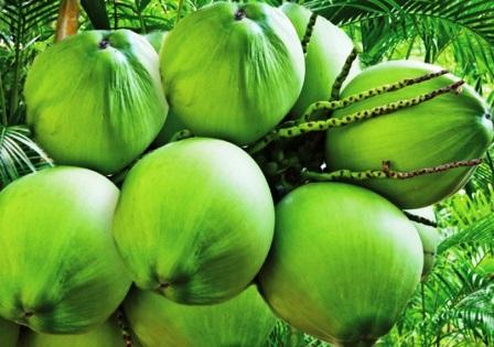 3 Konsumsi Makanan Yang Bisa Memperlancar Haid
