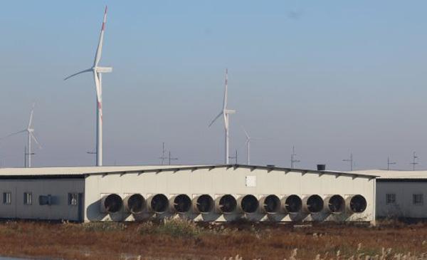 Ảnh 2: Một trang trại heo mới xây dựng gần cảng Liên Vân, Trung Quốc - ảnh Vincentter Beek