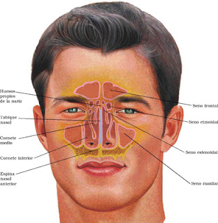 Sinus headaches often begin as soon as you wake up in the morning, and ...