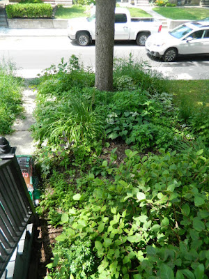Little Italy Toronto Front Garden Cleanup before by Paul Jung Gardening Services