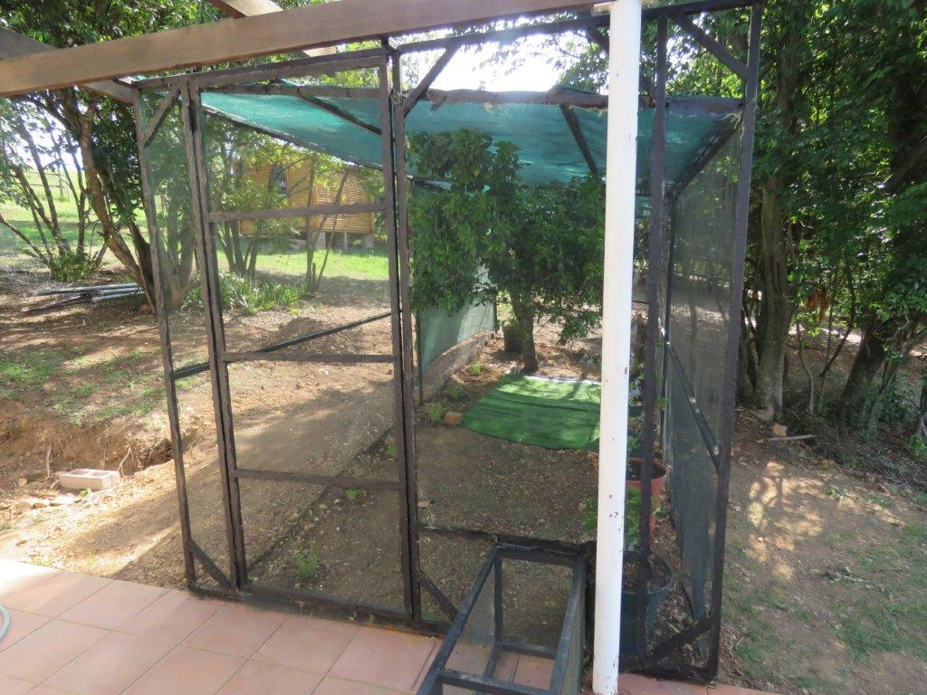 memorable meanders the cat enclosure