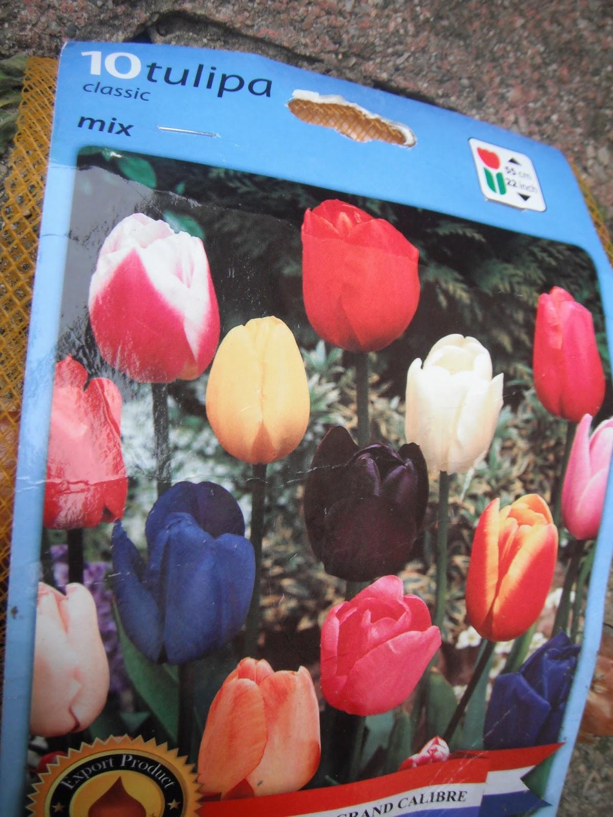 Touche a tout le retour bulbes de tulipes - Quand planter bulbes tulipes ...