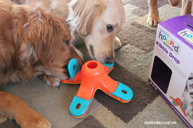 fun interactive dog toys, dog boredom, chewy.com influencer, kibble drop puzzle dog toy