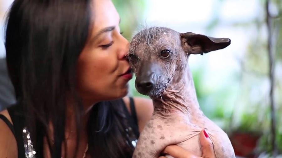Dante perro de Miguel, es de raza Xolo.