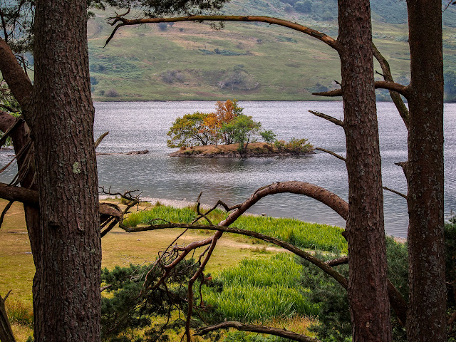 Photo of a small island in Crummock Water in the Lake District