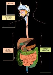 tips menjaga sistem pencernaan