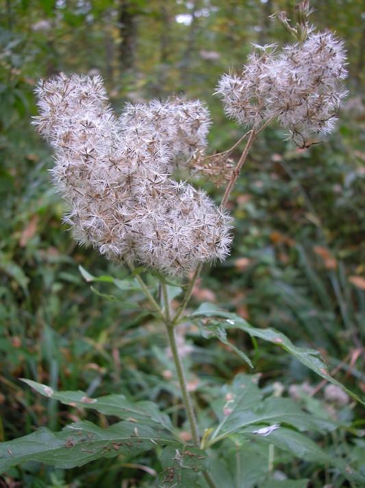 Les petites herbes prochaines animations les 2 octobre for Parc sauvage 78