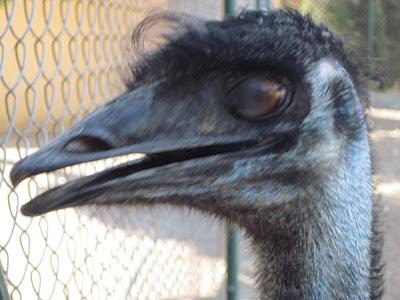 hector - castro ariño