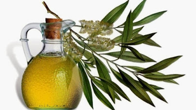 Cara Menghilangkan Jerawat dengan Minyak Pohon Teh