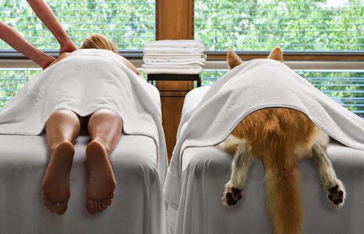Funny Dog Massage Parlour Joke Photo Picture