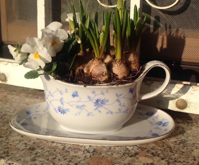 altes Geschirr bepflanzen - Frühling