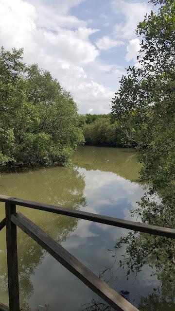 sungai dengan air berwarna cokelat