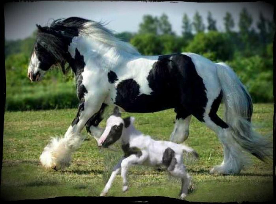 The smallest horse in the world ever - photo#30