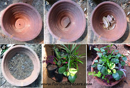 Decorative flower pots- mixed pot
