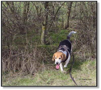 unterwegs mit zwei Hunden, der Raubvogel im Garten