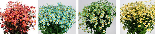 Dyed Chamomile bouquets