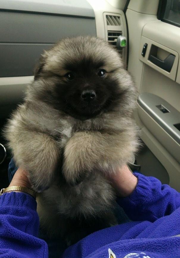 16 самых милых щенков на свете