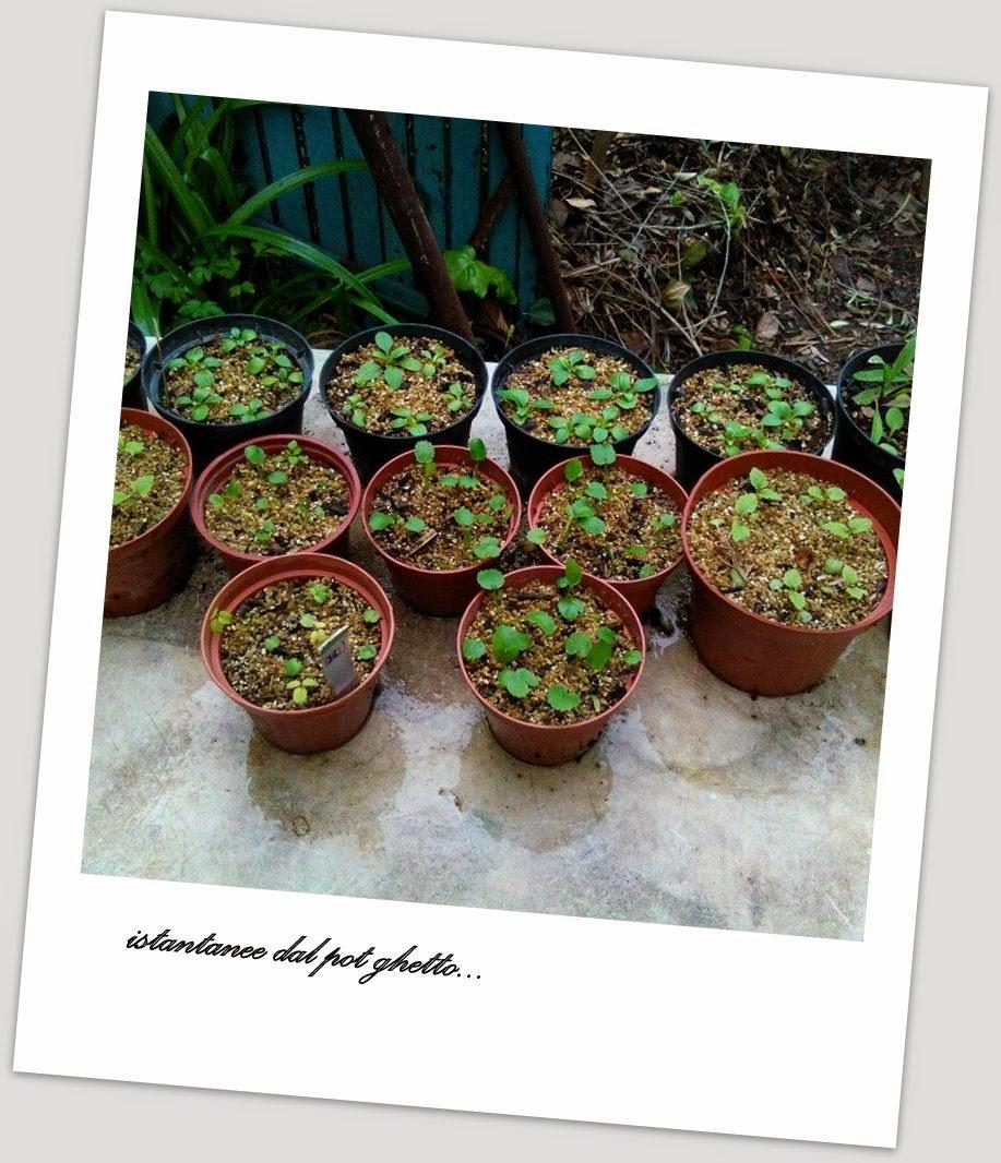 Giardino Cosa Piantare A Febbraio: Furighedda Gardening