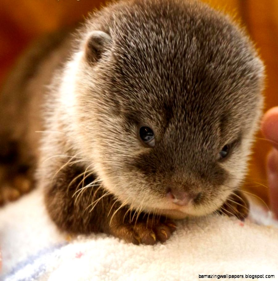 Really Cute Rare Animals