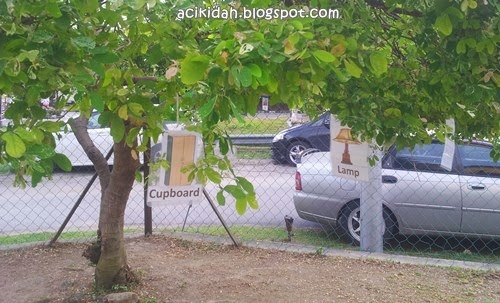 Pokok di tadika