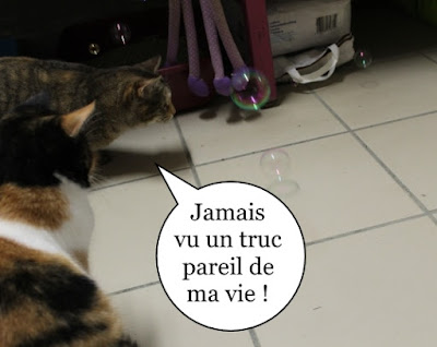 Quand des chats voient des bulles de savon.