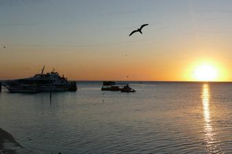 Abendstimmung Schiff Heron Island Vogel Silhouette Stimmung Meer