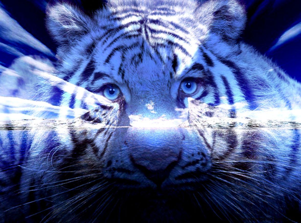 blue tiger wallpaper