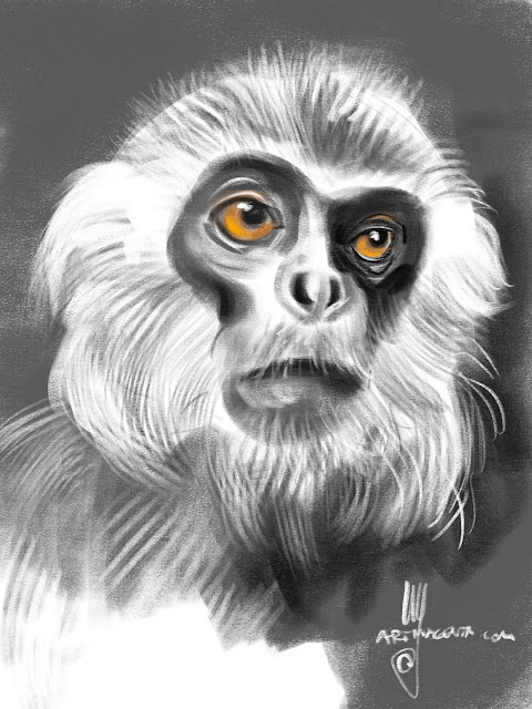 Monkey sketch by Artmagenta