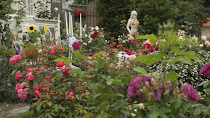 Håkan on TV