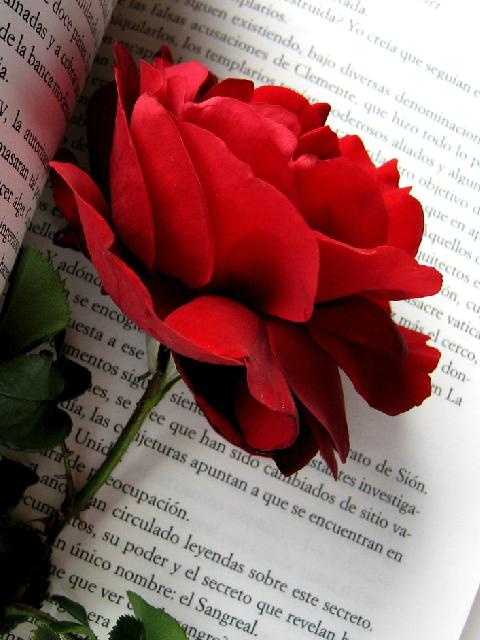 Falling Rose Petals Wallpaper Imageslist Com Red Roses Part 5